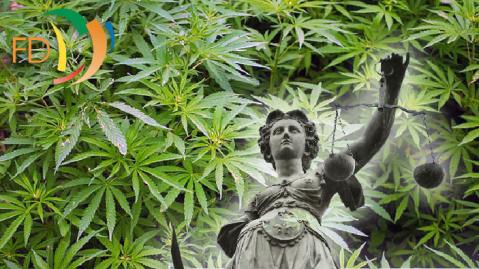 cannabis-703x395